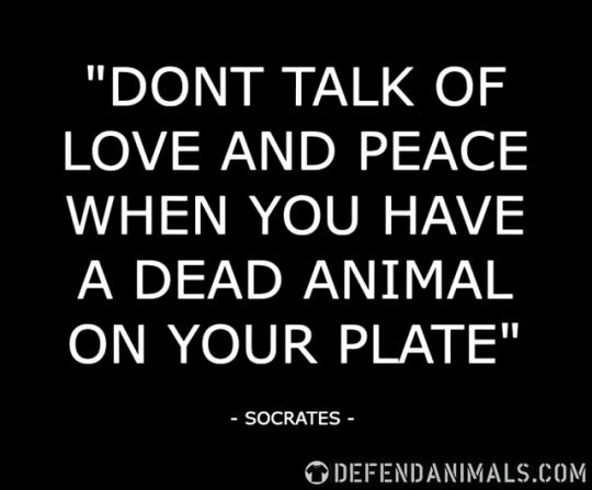 socrates - dead animal